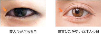 東洋人・西洋人の目