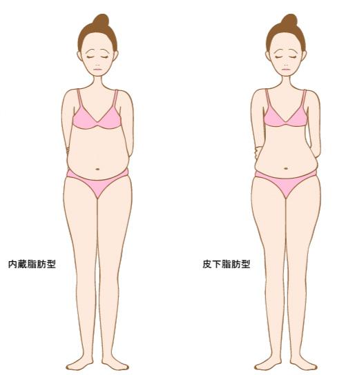 内臓脂肪型と皮下脂肪型